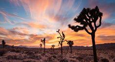 Palm Springs, Coachella Valley, California | Inspirato Luxury Vacation Residences