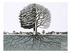 Unidentified Tree, Showing Half Without Leaves and Root System Giclee Print at Art.co.uk