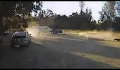Chihuahua FULL Rottweiler Rescues Chihuahua From Coyote Attack Coyote Attacks Chihuahua Dog Video