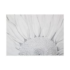 Sunflower Gallery Wrap Canvas by Natural View