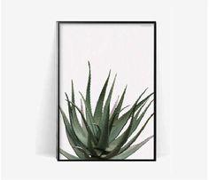 aloe botanical poster print/Cactus aloe print/plant print/herb cacuts poster print/botanical poster/cactus aloe photohraphy print/monstera by BeautyOfPrints on Etsy https://www.etsy.com/listing/509990862/aloe-botanical-poster-printcactus-aloe