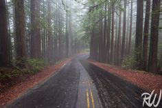 Road Through Foggy Redwood Forest, Mount Tamalpais State Park, California  #roads #forests #travelphotography #castateparks