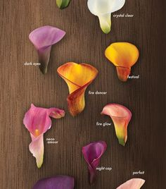 A Glossary of Calla Lilies - Calla Lily Colors Shop our vibrant array of calla lily colors! #callalilies