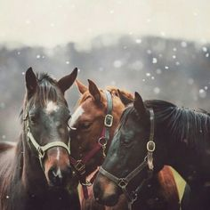 "snowflakesandsleighbells:  "" want more winter/holidays/snow on your dash?  follow snowflakesandsleighbells!  """