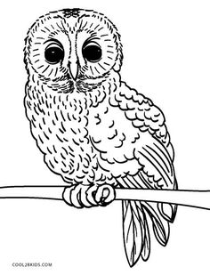 Image result for owl for coloring