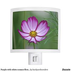 Purple with white cosmos flower night lites