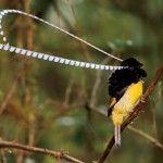 aves del paraiso (7)