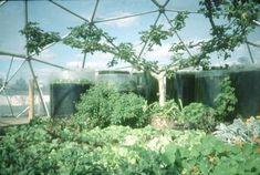 Greenhouse Pillowdome