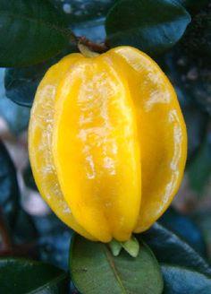 Pitangatuba Fruit, Eugenia Selloi, Star Cherry Apple Fruit, Fruit And Veg, Fruits And Veggies, Different Kinds Of Fruits, Variety Of Fruits, Colorful Fruit, Tropical Fruits, Brazilian Fruit, Fruit Names