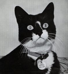 Simon, of the HMS Amethyst, was the first decorated cat in British military history.