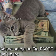 Gatos Cool, Instagram, Cats, Memes, Animals, Gatos, Animales, Animaux, Meme