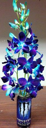 Blue Dendrobium Orchid in a Monster can. Designer Niki Compton