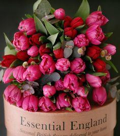 Rose colored tulips...beautiful!