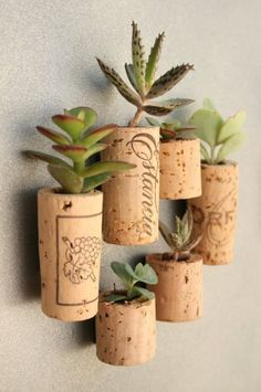 Wine corks as planters for tiny succulents.