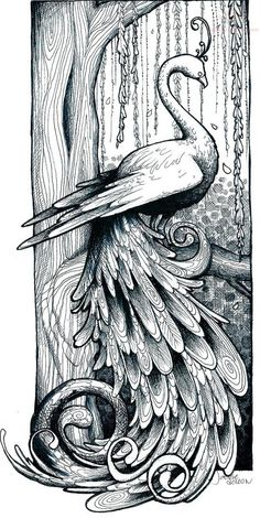 coloring pages - Peacock Drawing Tattoo Peacock Drawing, Peacock Art, Peacock Sketch, Peacock Tattoo, White Peacock, Coloring Book Pages, Coloring Sheets, Peacock Coloring Pages, Paisley Tattoos