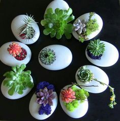 I saw an article on apartment therapy awhile back about using egg shells as seed starters. Many people compost their egg shells, so we know that they break down well. We don't have to worry about… Continue Reading →succulents in eggshellsDIY gi Succulent Centerpieces, Succulent Bouquet, Succulent Gifts, Succulent Gardening, Cacti And Succulents, Planting Succulents, Planting Flowers, Organic Gardening, Urban Gardening