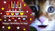 Happy Birthday! Birthday wishes and cake with funny cat