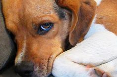 11 Guilty Dogs Who Are Very Sorry For What They've Done.