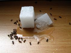 Natural Insect Killers: (1)  Natural spider killer or preventer.. 1 cup vinegar,  1 cup pepper sauce, 1 teaspoon  oil and 1 tsp liquid soap. Put it into a spray bottle and spray along the outside of your outside door and along windows; refresh after it rains.  (2) use Borax to prevent ants and fleas.