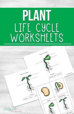 Plant Life Cycle Worksheets for Kids Gardening season is here so learn about plants with these fun plant life cycle worksheets for kids. Get them excited about plants in your own backyard. Learn about the parts of a plan and their life cycle stages. Sequencing Activities, Science Activities For Kids, Science Curriculum, Kindergarten Worksheets, Worksheets For Kids, Homeschool Worksheets, Homeschooling, Homeschool Apps, Kindergarten Readiness