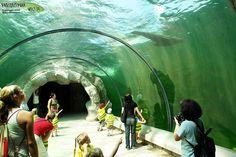 Zoom Erlebniswelt zoo in Gelsenkirchen