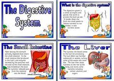 751 Best Digestive System Images On Pinterest In 2019 Nurses