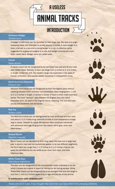 """Use this handy guide to identify animal tracks on the trail or in your yard. I love that it says """"useless"""" Survival Gear List, Camping Survival, Survival Skills, Survival Hacks, Survival Guide, North American Animals, Zombie Apocalypse Survival, Animal Tracks, Walk In The Woods"""