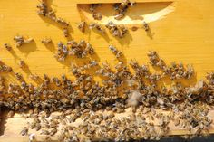 Urban beekeepers need green space, and many airports have plenty of it — fields that legally cannot be built on. Chicago's O'Hare now has the largest airport apiary project in the world.