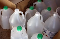 The Green Phone Booth: How Empty Milk Jugs Changed My Garden