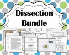 High school zoology curriculum zoology pinterest zoology biology dissection bundle pig frog crayfish earthworm fandeluxe Gallery