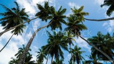 Stock Video of Abstract iconic timelapse scenic of palm trees(coconut) against bright blue sky with scattered clouds on sunny day, tropical island(beach), Seychelles. at Adobe Stock Island Beach, Seychelles, Stock Video, High Quality Images, Palm Trees, Sunny Days, Stock Footage, Adobe, Coconut