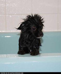 little wet puppy