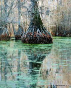 Louisiana- love to fish around cypress trees.