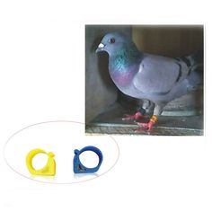 Free shipping 50pcs ISO11785 125-134.2KHZ EM4305 chips Pigeon foot ring Letter pigeon supplies Bird token ring  #Affiliate