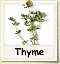How to Grow Thyme | Guide to Growing Thyme. One of my favorite herbs.  Adds such an earth, meaty flavor almost to dishes.