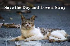 Love a stray ♥ http://pinterest.com/nfordzho/lovely-animals/