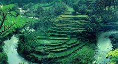 Sayan, Ubud. #travel #jcrew