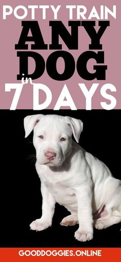 If you need help house training your dog, check out this guide to potty training a puppy or adult dog in 7 days.
