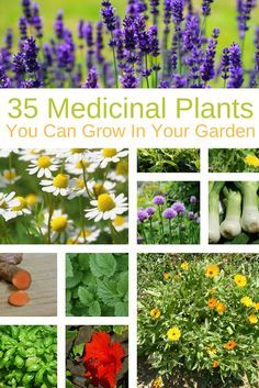 Grow a few of these medicinal plants in your garden: they're beautiful, and you'll have natural remedies at your fingertips