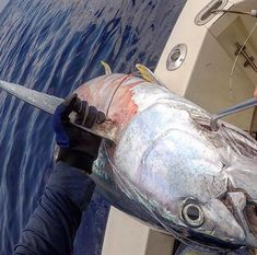 Their main characteristic of TUNA is that they are fast and strong.  https://www.coastalfishing.com/collections/all-products?utm_content=bufferc9cc6&utm_medium=social&utm_source=twitter.com&utm_campaign=buffer  #saltwaterfishing #deepseafishing #angling #offshore #fishing #lovetofish #tuna Image courtesy by pro team member @tunasindabox