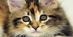 The best cat photos that we have sourced and posted to our Facebook page. Click here for endless amazing cat photos.