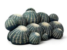 Cactus sofa, Baleri