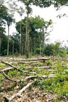 La selva tropical con su gran biodiversidad está desapareciendo rápidamente en el mundo, por la tala y quema llevada a cabo con el fin de tr...