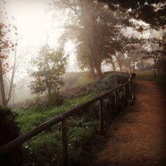 "Hoje aqui na ""minha serra"" estamos assim... Bom dia  #morning #beautiful #love #life #instagood #selfie #breakfast #sunshine #cute #tired #sunrise #sky #girl #sleepy #coffee #day #me #work #early #wake #goingout #ready #instadaily #snooze #awake #bed #good #instalike #tagsforlikes #tbt"