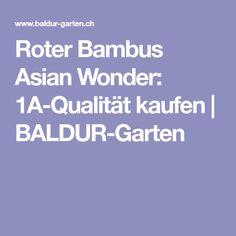 Roter Bambus Asian Wonder: 1A-Qualität kaufen | BALDUR-Garten