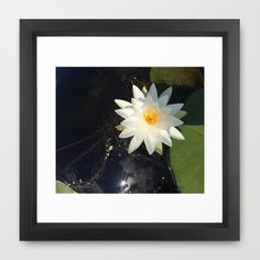 Naturals by Nikki - White Water Lily (open) Framed Art Print