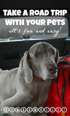 Practical Tips for a Road Trip With Dogs — from a couple who have been traveling with pets for 13 years!  Read here: http://www.nomadwallet.com/road-trip-with-dog-interview/