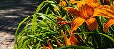 Orange Flowers 1 | Flickr – Condivisione di foto!