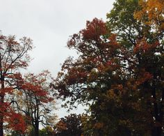 Autumn, Fall, All Pictures, Clouds, Earth, World, Nature, Photos, Outdoor