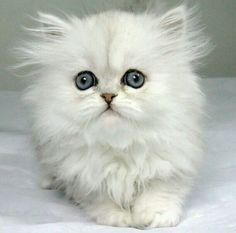 Little fluffy ♡♡♡
